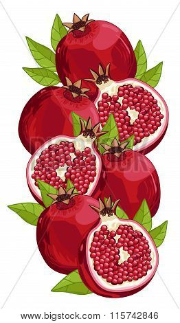 Pomegranate isolated, Vector, composition.