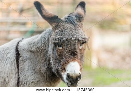 Muzzle Of Donkey