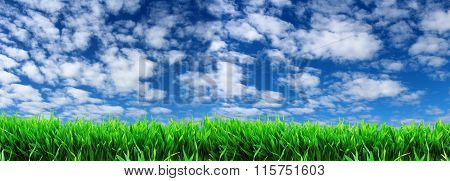 panoramic image of green grass on a background of blue sky with white clouds.