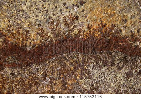 The detail texture of stone. rough stone texture closeup horizontal background with leaves imprint.