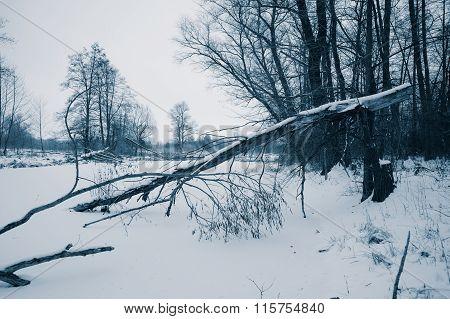 Old Fallen Trees