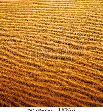 The Brown Sand Dune In The Sahara Morocco Desert