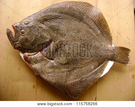 Turbot fish for cooking