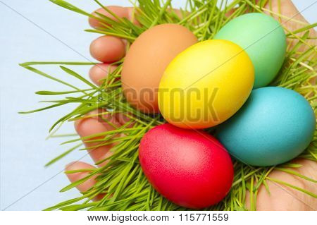 A Bird's Nest In Female Hands
