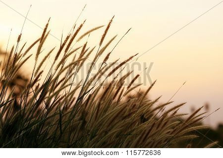 Bright golden grass flower beside railroad in sunset light