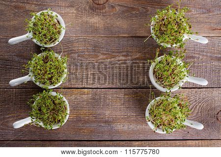 Homes to grow sprouts.
