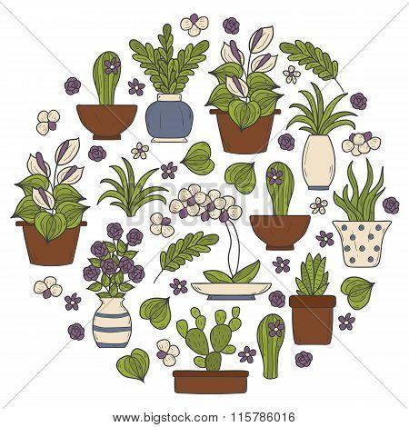 Round houseplant background