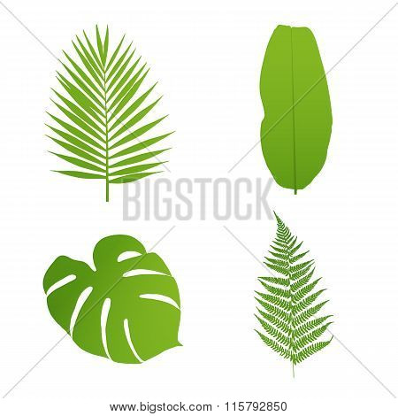 Set of tropical leaves. Palmbananafernmonstera. Vector illustration.