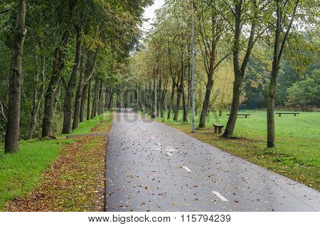 Alley With Fallen Leaves In Park
