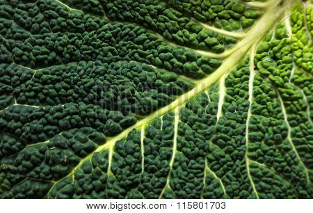 Savoy cabbage on wooden background