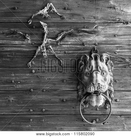 grazzano visconti, Italy: castle's wooden portal with lion knocker and bird skeletons