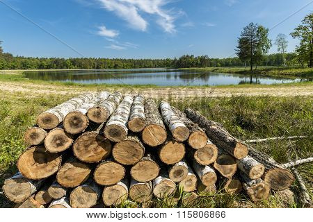 Wood Logs On The Lake In The Forest