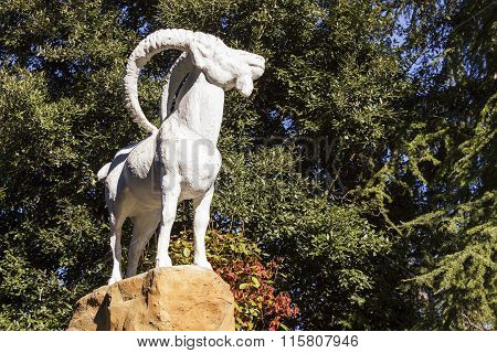 Mountain Goat. Sochi, Russia