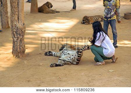 Tiger Temple in Kanchanaburi, Thailand