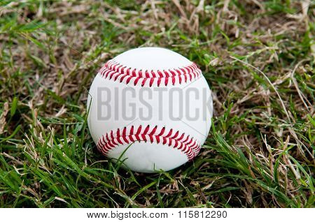 Baseball Sitting In The Grass