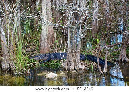 Alligator Having Rest Near Trees