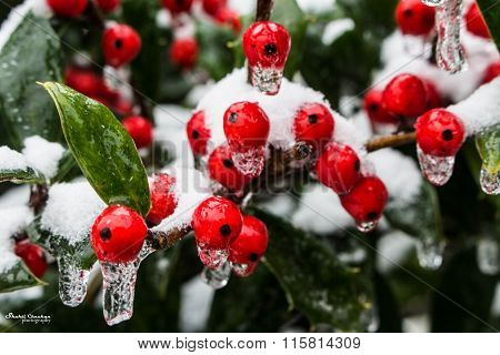 Freezing fruits