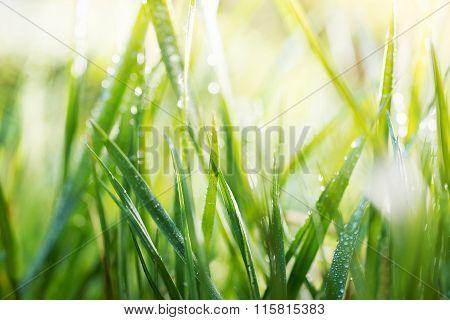 Green Background, Detail Of Grass