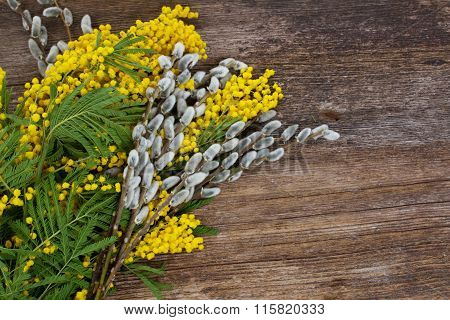 French mimosa with catkins