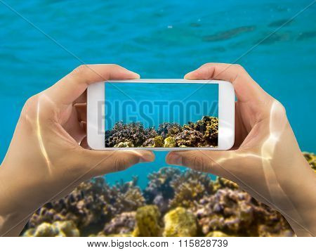Taking Photo Under Red Sea