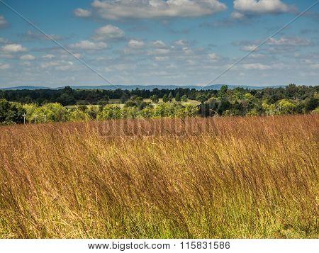 Landscape from Manassas Battlefield