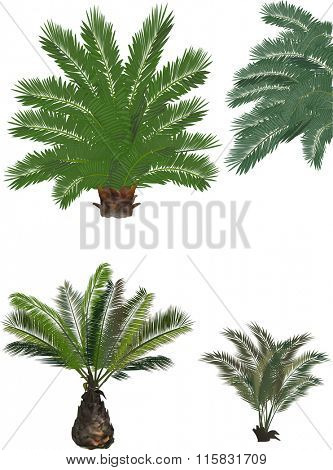 illustration with lush green palm trees isolated on white background
