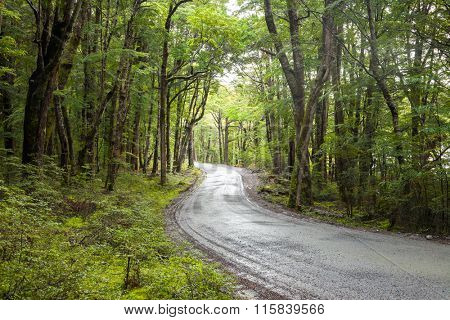 Winding gravel road through temperate rainforest at the South Island of New Zealand