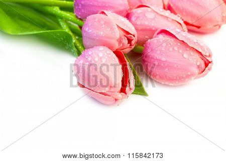 Beaytiful Tulips Flowers with Waterdrops - holiday border on white background