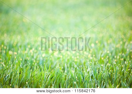 Green Spring Grass with drops of dew - defocused bokeh background, focus on the front grass