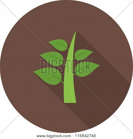Plant I
