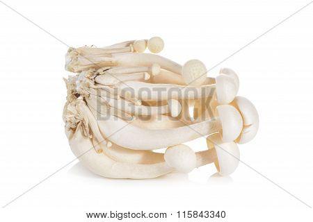 Shimeji Mushroom, White Beech Mushrooms On White Background