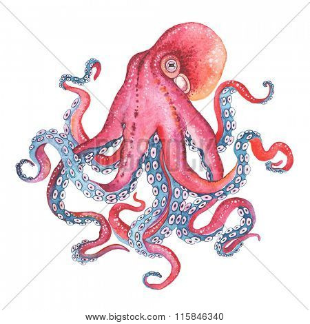 Watercolor illustration Octopus.