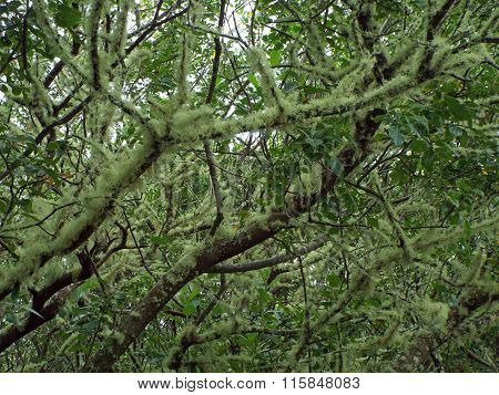 Mossy Trees In An Undisturbed Wooded Area