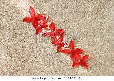 Flowers on sand