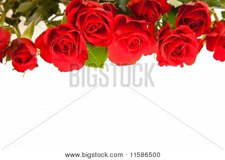 Red roses on white isolated background valentine's day
