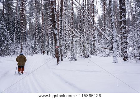 A Walk In The Winter Woods.