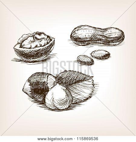 Nut sketch style vector illustration