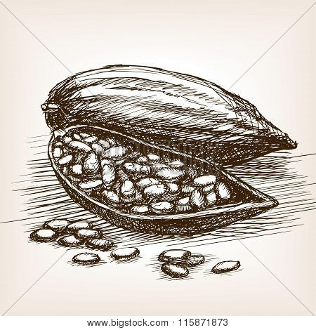 Cocoa beans sketch style vector illustration