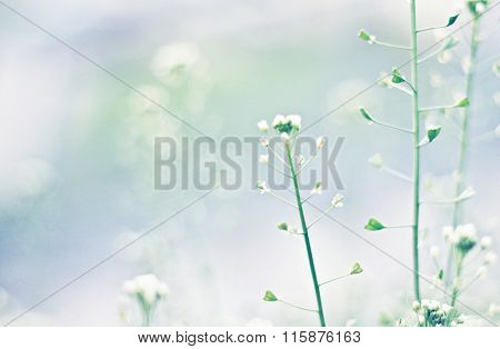 Tender blue soft nature background