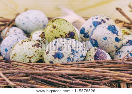 Small colorful quail eggs in wooden nest
