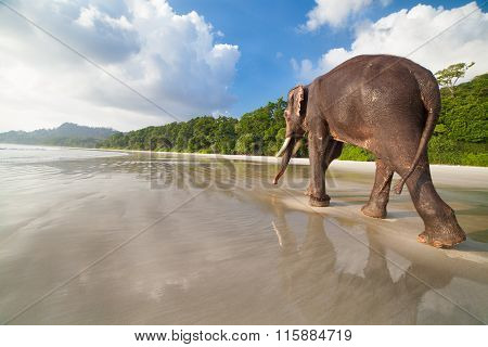 Walking Elephant On The Tropical Beach Background