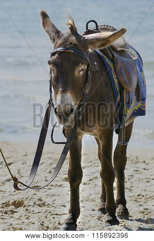 donkey on the beach