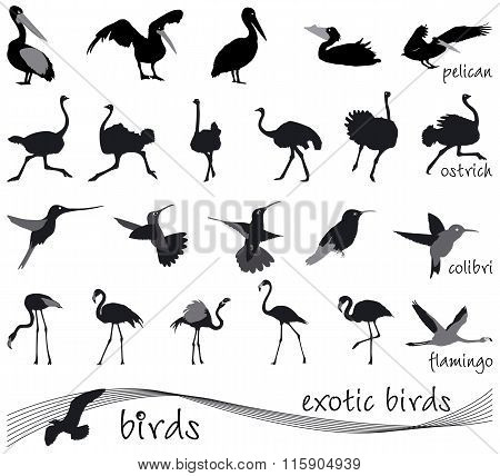Vector Collection Of Silhouettes Of Exotic Birds