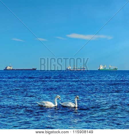 White Swans In The Black Sea