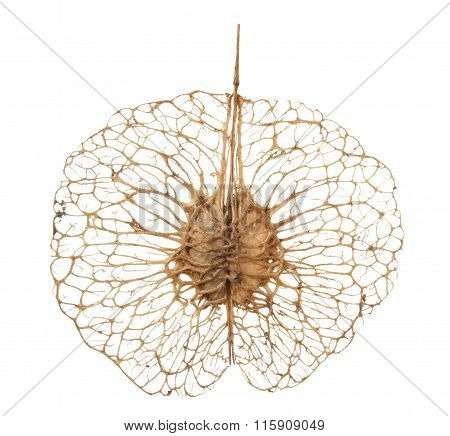 Strange Seed Ornament
