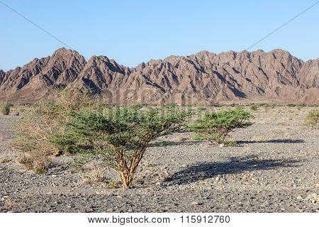 Landscape In Oman