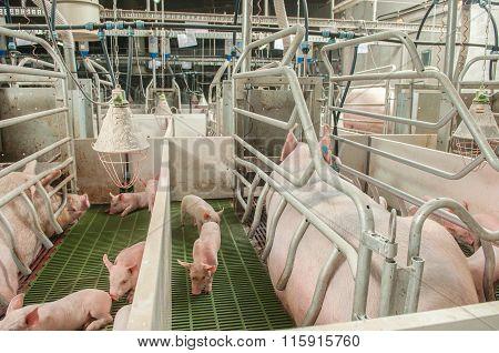 Pork Plant
