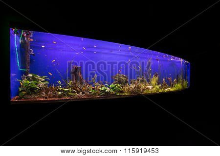 Photo of a tropical fish on a coral reef in an aquarium