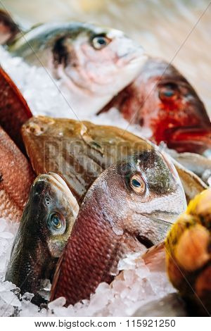 Raw delicious fresh fish on ice on market store shop. Dorado fis