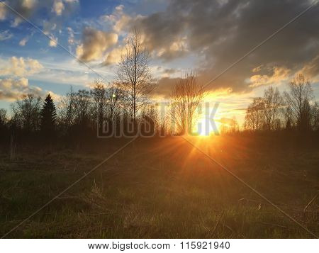 Sunset over a field and the wood